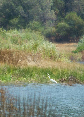 Photograph - Finnon Lake Egret by Wes Jimerson