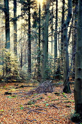 Photograph - Fir Forest-2 by Henryk Gorecki