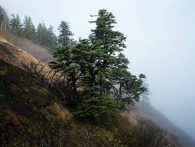 Photograph - Fir On Saddle Mountain by Robert Potts