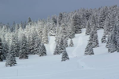 Photograph - Fir Trees In Winter, Jura Mountain, Switzerland by Elenarts - Elena Duvernay photo