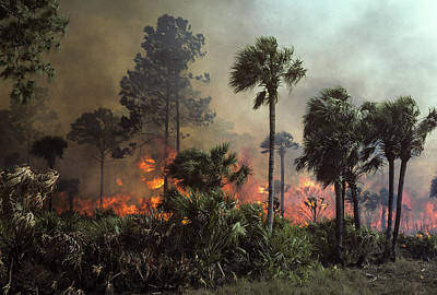 Photograph - Fire And Sabal Palmetto by Robert Potts