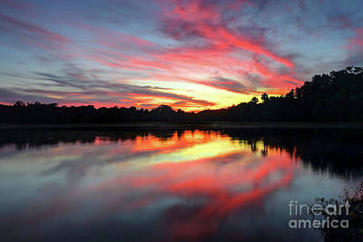 Dainty Daisies - Fire Clouds by Rick Mann