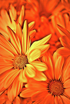 Photograph - Fire Daisies by Onyonet Photo Studios
