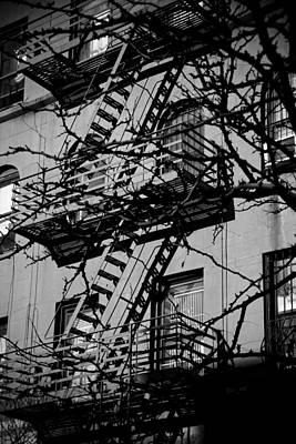Fire Escape Tree Print by Darren Martin