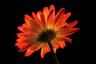 Photograph - Fire Flower by Mary Jo Allen
