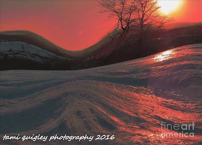 Photograph - Fire Frost by Tami Quigley