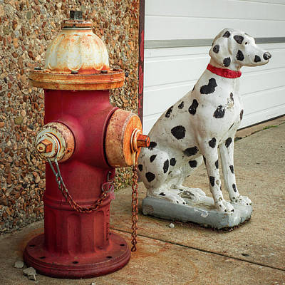 Photograph - Fire Hydrant And Dalmation - Fire Station Art by Gregory Ballos