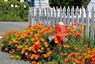 Photograph - Fire Hydrant Embraced By Poppies by Michele Avanti