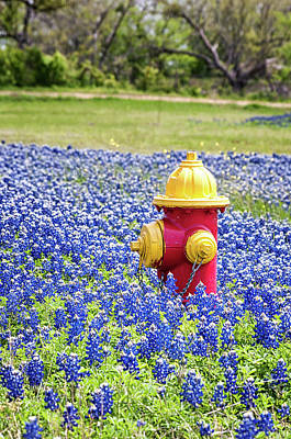 Photograph - Fire Hydrant In The Bluebonnets by Victor Culpepper