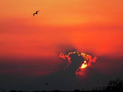 Photograph - Fire In The Sky by Charles McKelroy