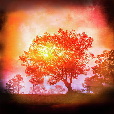 Mandala Photograph - Fire In The Trees In Square by Debra and Dave Vanderlaan