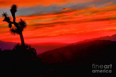 Photograph - Fire Over Joshua Tree by Adam Jewell