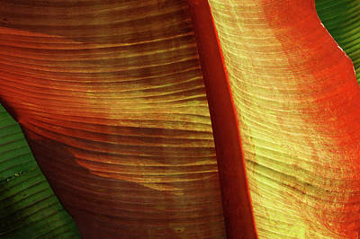 Photograph - Fire Palm by Windy Osborn