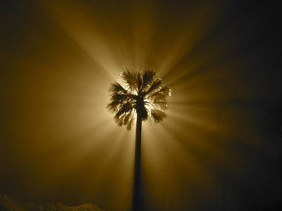 Photograph - Fire Palmetto  by Thane Hollington
