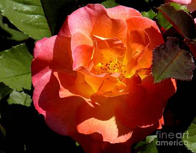 Fire Rose Art Print by Terri Thompson