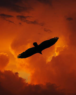 Flycatcher Digital Art - Fire Sky Flight by Ron Kruger