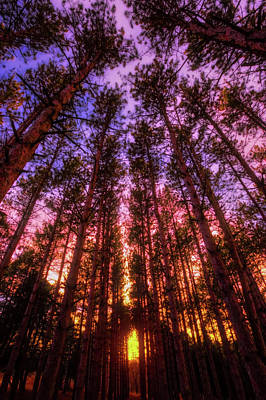 Fire Sky - Sunset At Retzer Nature Center - Waukesha Wisconsin Print by Jennifer Rondinelli Reilly - Fine Art Photography