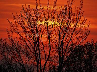 Photograph - Fire Sky Tree by Todd Rojecki