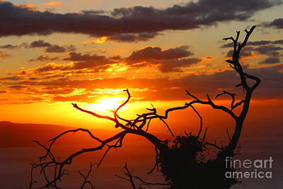 Wall Art - Photograph - Fire Sunset by Elaine J Hoffman