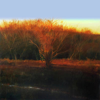 Painting - Fire Tree 2 by Cap Pannell