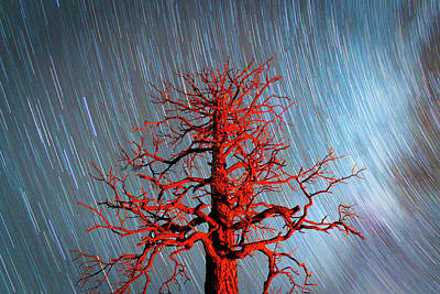 Photograph - Fire Tree by Skyler Russell