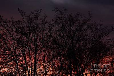 Photograph - Fire Trees by Angela J Wright