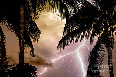 Aruba Photograph - Fire Under The Palms by Jon Neidert