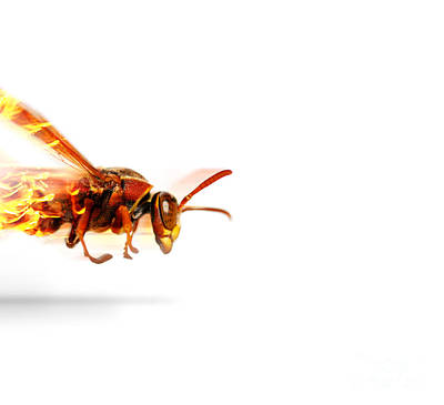 Fire Wasp Racing At Scorching Speed Art Print by Jorgo Photography - Wall Art Gallery