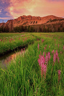 Photograph - Elephants Head Wildflowers With Hayden Peak, Uinta's by Johnny Adolphson
