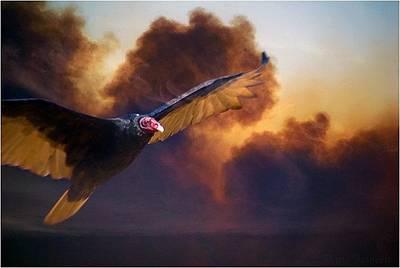 Firebird 2 Original