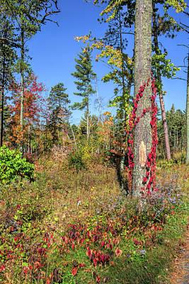 Photograph - Firecracker Foliage by John M Bailey