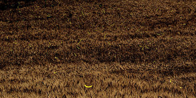 Photograph - Fireflies And Wheat by Rob Graham
