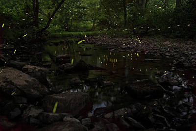 Photograph - Fireflies At The Creek by Eilish Palmer