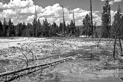 Photograph - Fallen Logs And Bacterial Mats Black And White by Adam Jewell