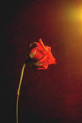 Photograph - Firelit Rose by Casey Becker