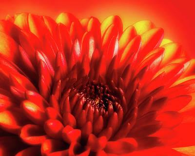 Flora Photograph - Firery Mum by Tom Mc Nemar