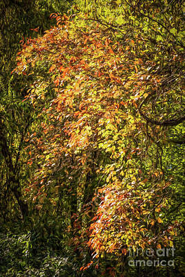 Photograph - Fires Of Autumn by Judy Wolinsky