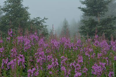 Photograph - Fireweed And Fog by Fraida Gutovich