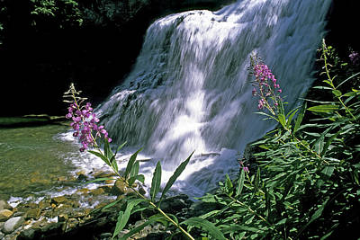 Gallatin Photograph - Fireweed And Ouzel Falls, Near Big Sky by Gordon Wiltsie