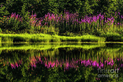 Photograph - Fireweed At Picture Lake by Paul Conrad