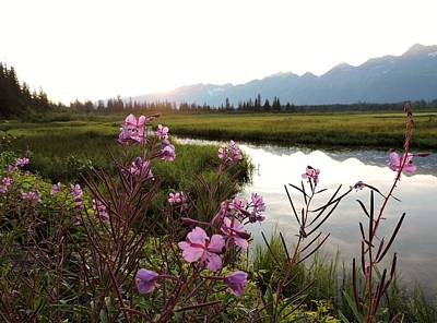 Photograph - Fireweed At Robe Lake by Denise   Hoff