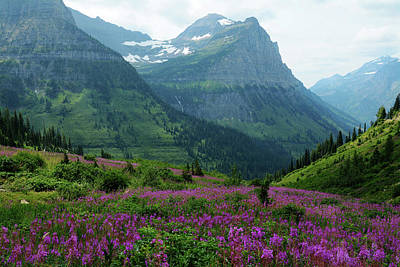 Photograph - Fireweed In Glacier by Whispering Peaks Photography