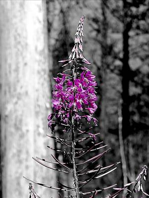 Photograph - Fireweed by Leah Grunzke