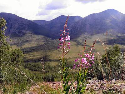 Photograph - Fireweed On The Mountain by Adam Owen