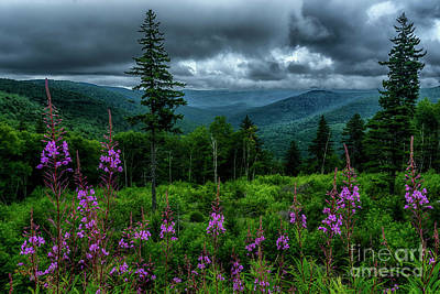 Photograph - Fireweed On The Mountain by Thomas R Fletcher