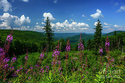 Photograph - Fireweed View Williams River Valley by Thomas R Fletcher