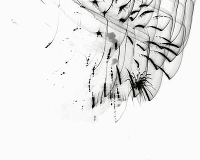 Drawing - Firework Abstract 5 by Michelle Calkins