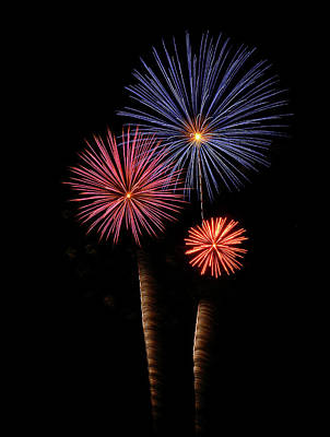 Photograph - Firework Trees by Elaine Malott