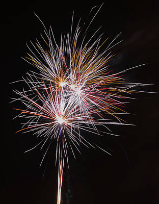 Photograph - Fireworks Midnight Dandelion by Scott Lyons