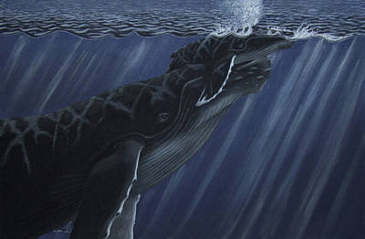 Humpback Whale Drawing - First Breath by Heather Ward